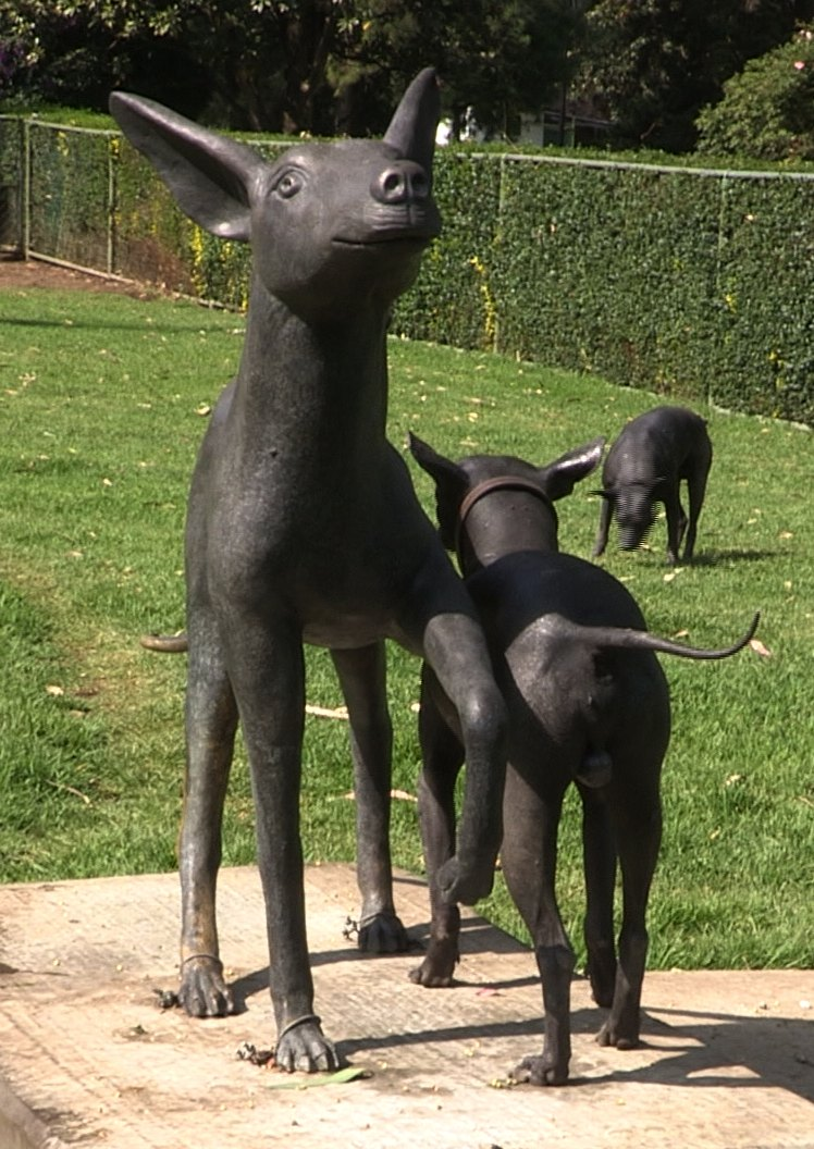 Xoloitzcuintli dog and statue Mexico